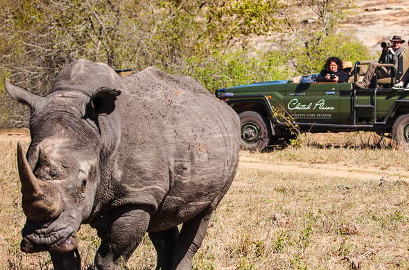 Guests spotting a rhino on game drive at the Cheetah Plains.