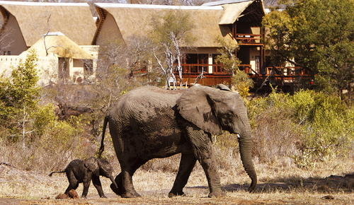 Elephants outside a classic Sabi Sands safari lodge.