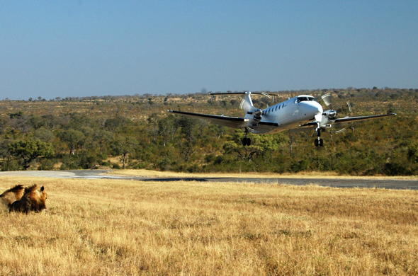 Fly directly into the Sabi Sand Private Game Reserve.