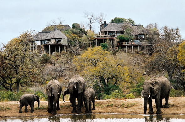 Elephants near waterhole at Leopard Hills Safari Lodge.