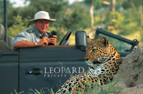 Close encounters with leopard on game drives.