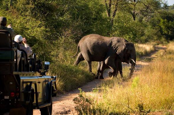 Elephant spotted on a Lion Sands Ivory Lodge game drive.