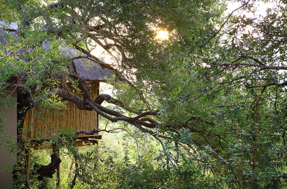 Londolozi Tree Camp has private Tree House accommodation.