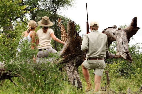 Guided walking safari in Sabi Sand Game Reserve.