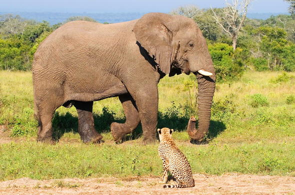 Elephant and cheetah encounters are among the many unique sightings that await at Nkorho Bush Lodge.
