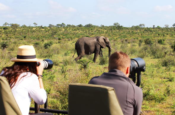 Photographic Safari in Sabi Sands Game Reserve.