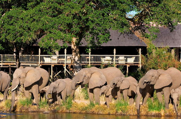 Elephants drinking at the waterhole in front of Sabi Sabi Bush Lodge.