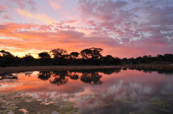 Sunset in Sabi Sands Game Reserve.