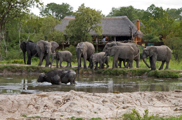 Simbambili Safari Lodge.
